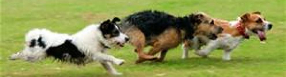 Dog Days of Summer Celebration, Colver Road Park